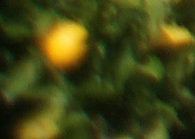 october08/2450wf4c.jpg