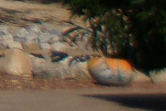 September2009/24cn28.jpg