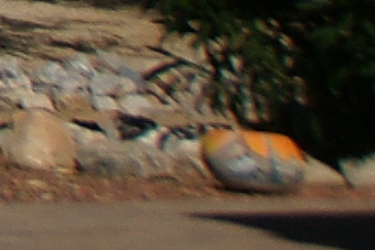 September2009/24cn56.jpg