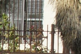 March2010/300ssm80cn.jpg