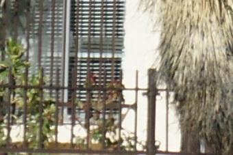 March2010/300ssmctr28.jpg