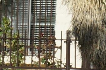 March2010/300ssmctr56.jpg