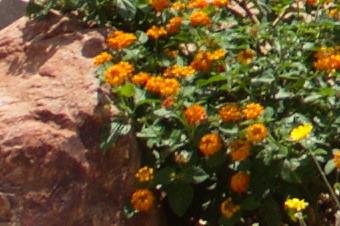 JUNE2011/3514corn28.jpg