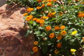JUNE2011/3514corn56.jpg