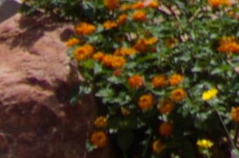 JUNE2011/3518corn20.jpg