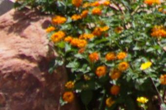 JUNE2011/3518corn28.jpg