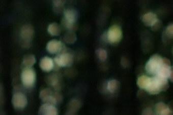 Jan2010/35mmbokf4.jpg