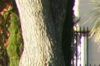 May2010/80200tf80mid.jpg