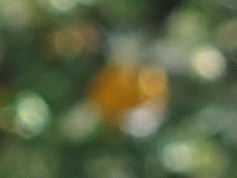 2012/g1xboklong58.jpg