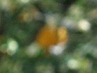 2012/g1xboklong80.jpg