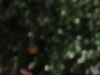 2012/g1xbokshort40.jpg