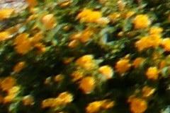 2008/min24cr40.jpg