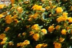 2008/min24cr56.jpg