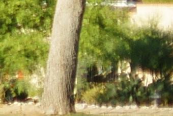 May2010/s5028cnq.jpg