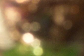 endof2011/s816bok16f80.jpg