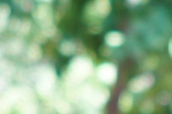 2012summer/sig19nbok28cls.jpg