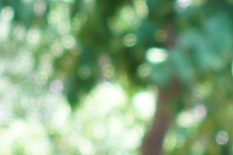 2012summer/sig19nbok40cls.jpg