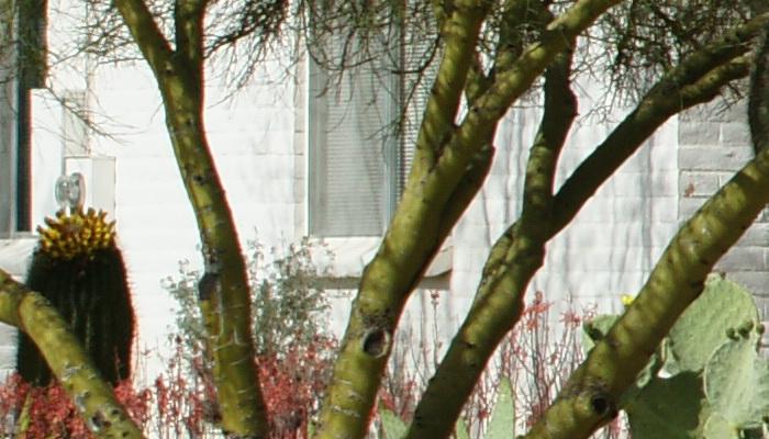 APRIL2011/sig70200osffcf.jpg