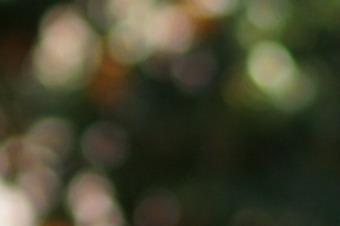 2012/sn5018bok18.jpg