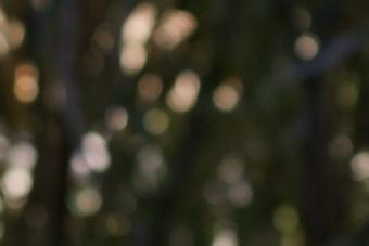 Janfeb2011/t70200bok7040.jpg