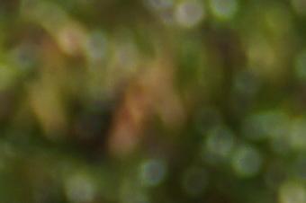 JUNE2011/t70300bok7040.jpg