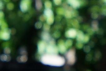 JUNE2011/tok1116bok40w.jpg